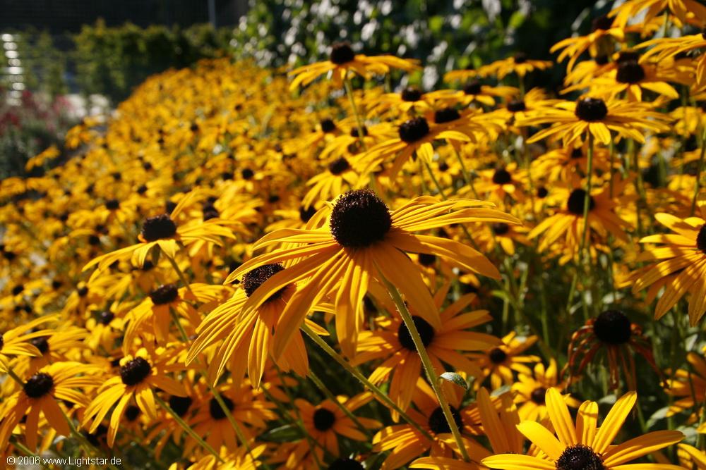 Blumen_Bild_008_2006